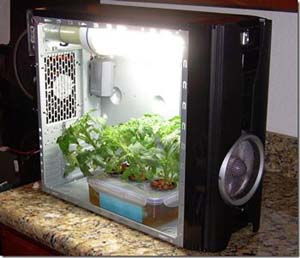 Micro Grow